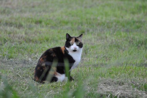 dottie_kat_boerderijkat
