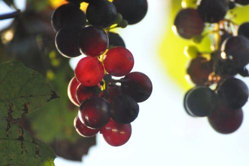 druiven_terras_klein_appartement